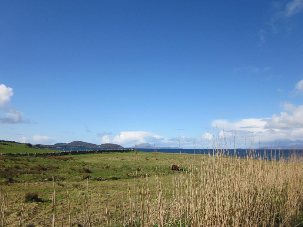 Prairie en bord de mer en Irlande près du Croagh Patrick.