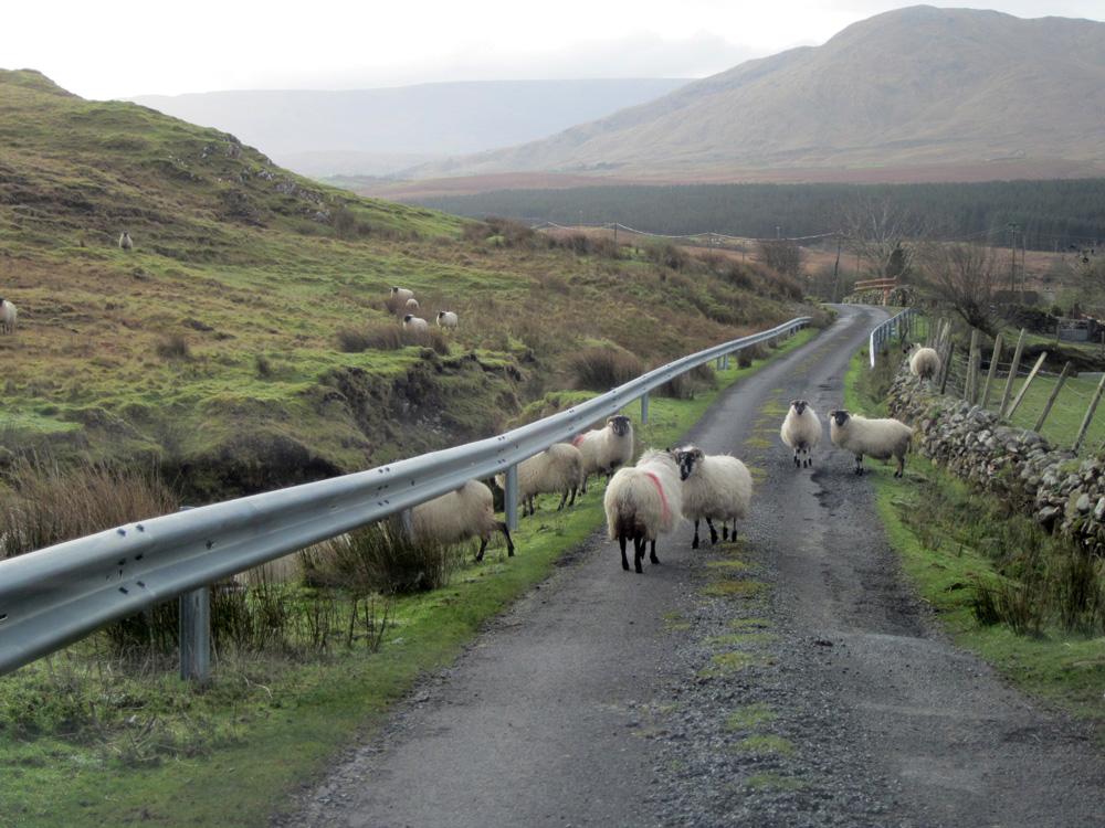 Petite route de montagne en Irlande avec des moutons.