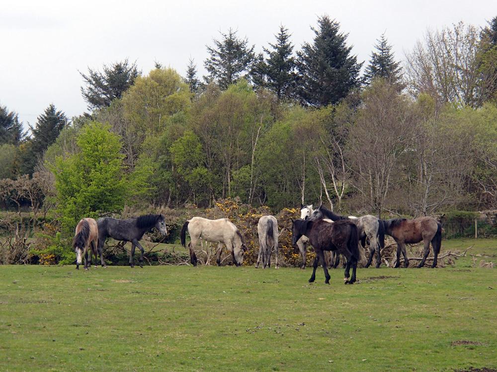 Un troupeau de chevaux dans la prairie.