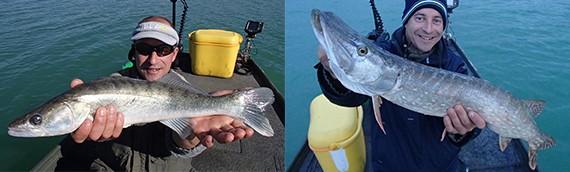 Montbel, 22 poissons…